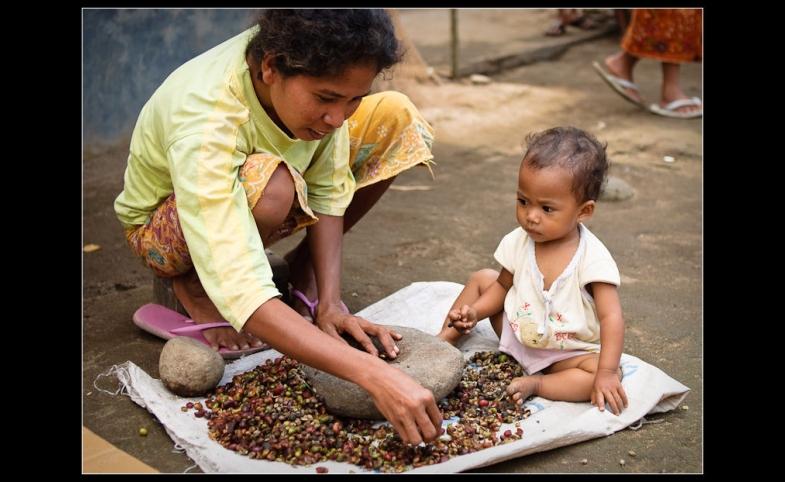 Sorting coffee in Lombok