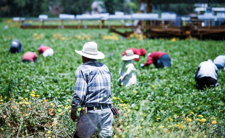Immigrant workers in Oxnard California. Photo by Alex Proimos via Flickr (CC BY-NC 2.0).